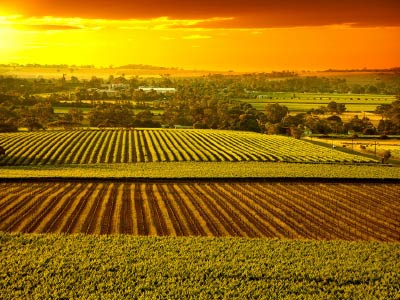 Barossa Valley Vineyards