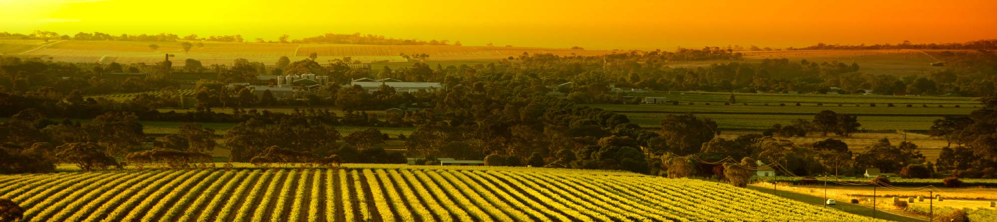 View over a winery in Barossa Valley at sunset