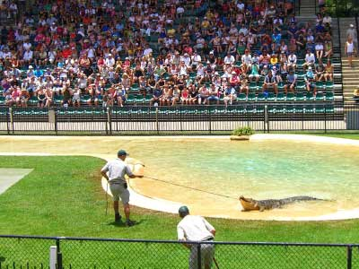 Show at the Crocoseum, Australia Zoo
