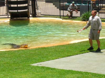 Wildlife Warriors Show at Australia Zoo