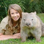 Wombat at Australia Zoo
