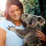 Cuddle a Koala at Lone Pine Koala Sanctuary