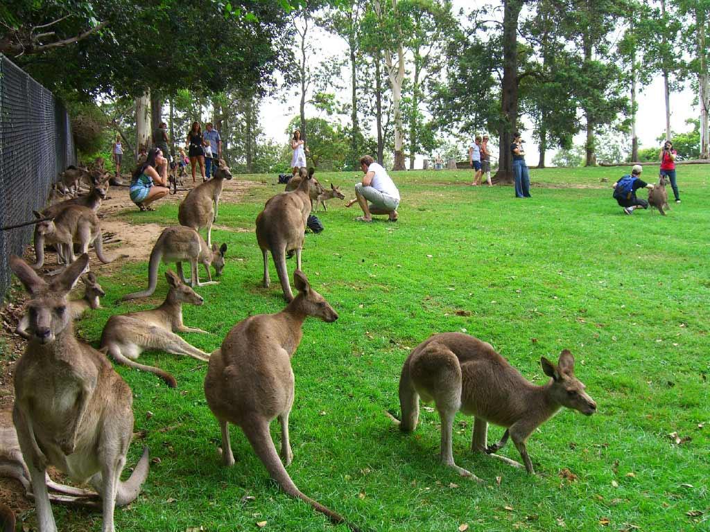 Koala Tours Australia