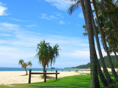 Palm trees at Moreton Island
