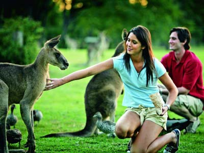Patting kangaroos at Lone Pine Sanctuary