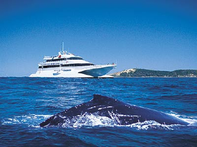 Whale Watching off Moreton Island