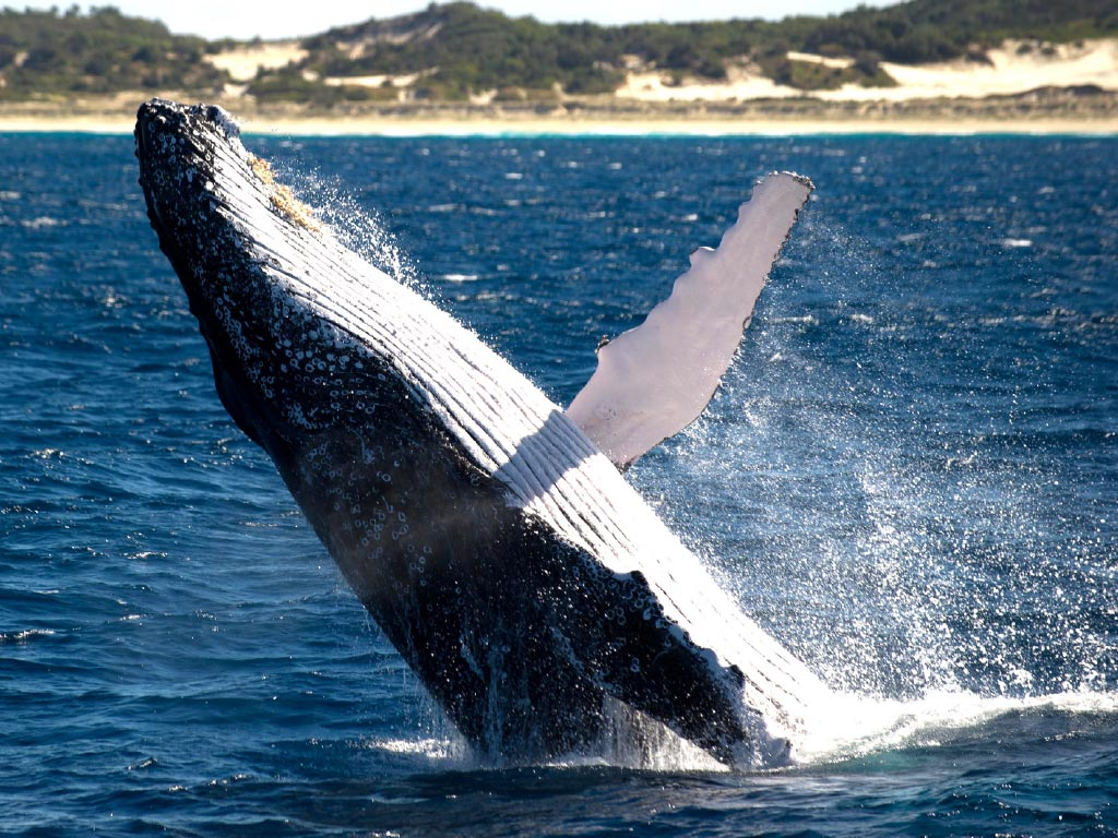 Image result for whale watching bruny island