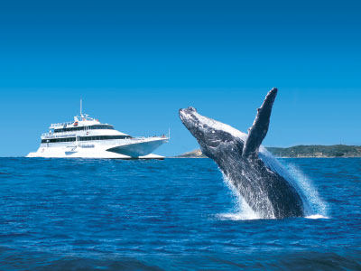 Tangalooma whale watching from Brisbane
