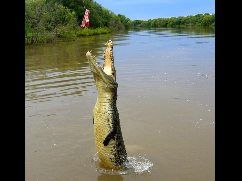 Crocodile Jumping Tours