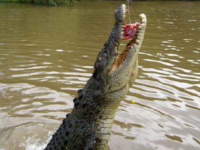 Jumping Crocodiles on the Adelaide River