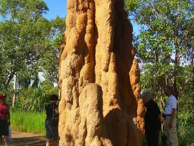 Towering Termite Mounds in Litchfield National Park