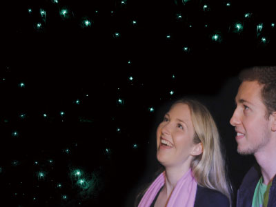 Observing Glow Worms