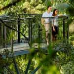 Rainforest Skywalk