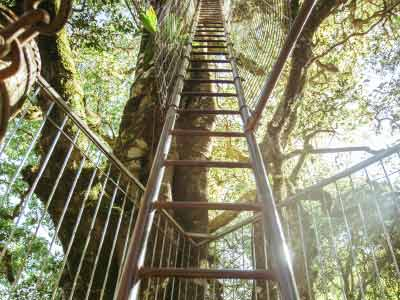 Staircase to the treetops