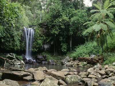 Tamborine National Park