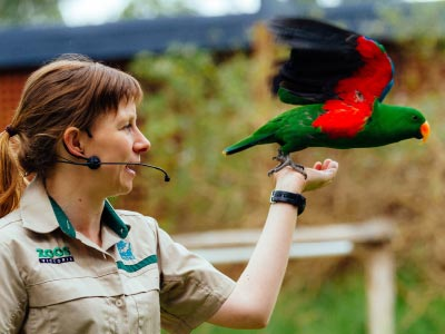Keeper with colourful parrot at Spirit of the Sky Show