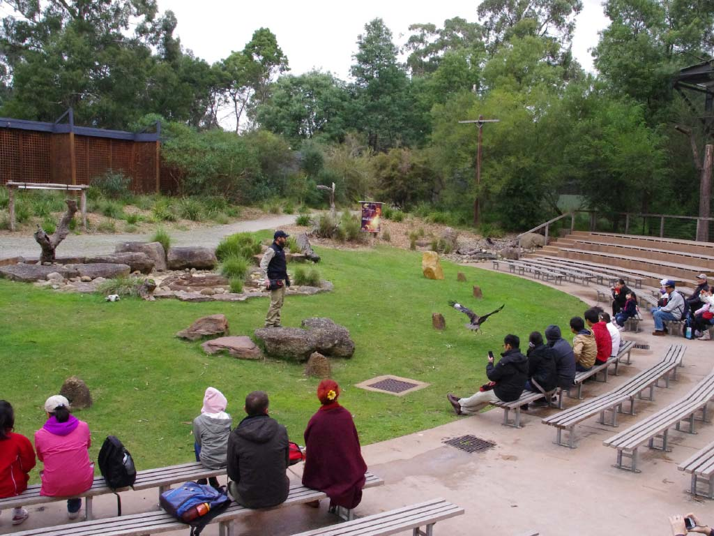 Healesville Sanctuary Tour with Blue Dandenongs