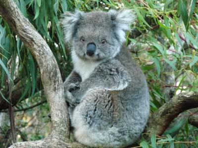 Native Wildlife Interaction at Ballarat Wildlife Park