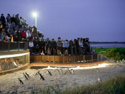 Penguin Parade, Penguins Plus viewing Platform