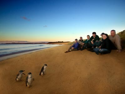 Penguin Parade special secluded beach tour - Ultimate Adventure