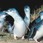 Penguin arrival - Penguin Express Tour