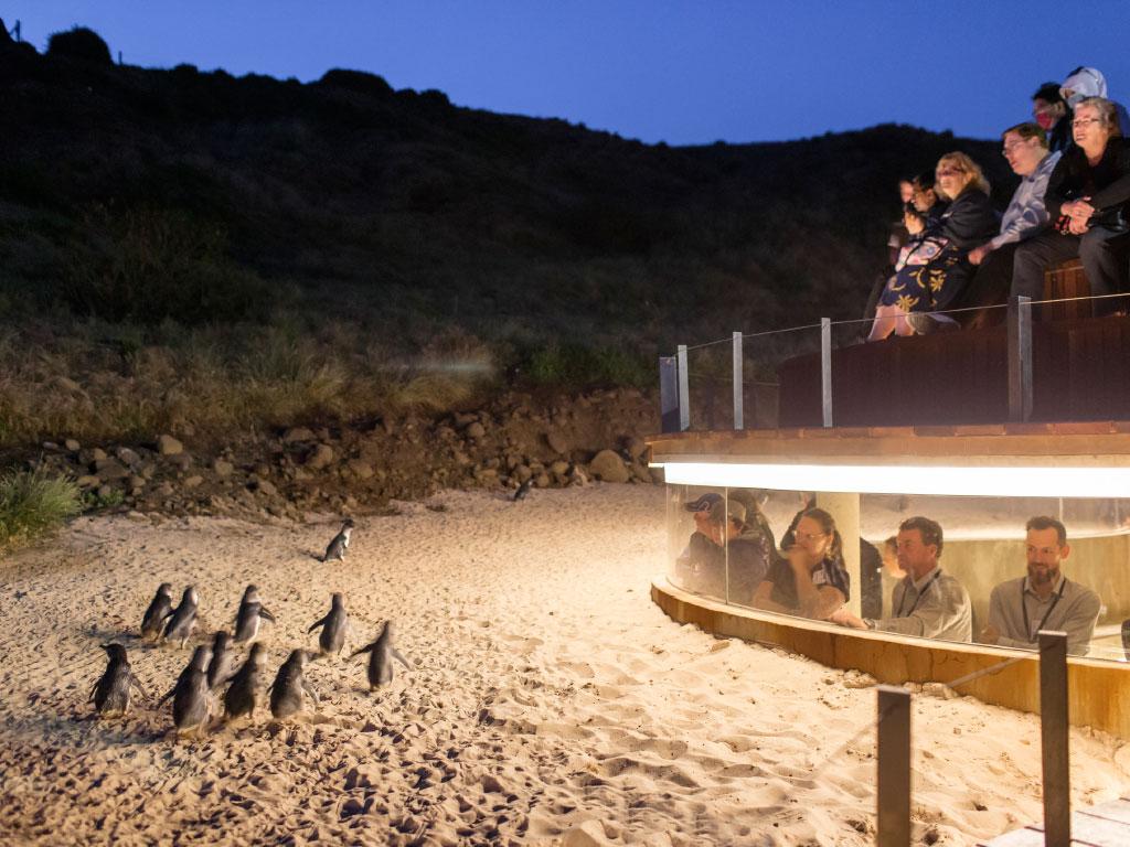 Visit Penguins Phillip Island On Own