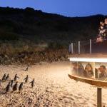 Underground Penguin Viewing area Phillip Island