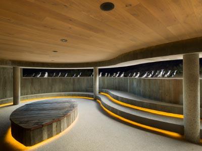 Underground penguin viewing area