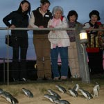Phillip Island Penguin Parade - Penguin Express Tour