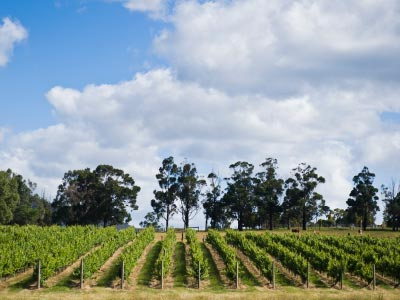 Vineyards in the Yarra Valley