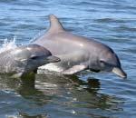 Mandurah dolphin cruise tour