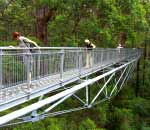 people looking 40 metres down from the steel walkway of the tree top walk at valley of the giants
