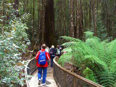 Strolling through the rainforest at Mount Field National Park